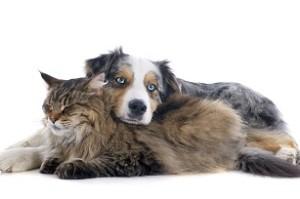 pet emergency kits